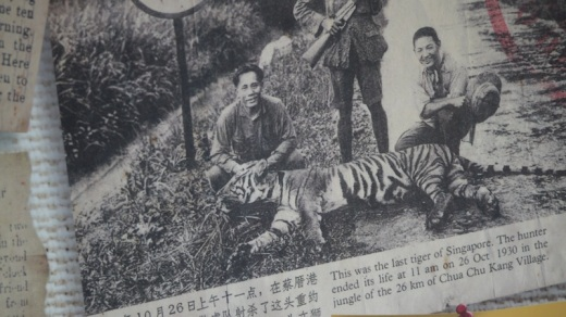 The last tiger in Singapore...