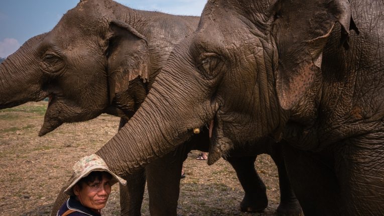 Blind Jokia in the foreground with her best friend, Mae Perm, and their mahout.